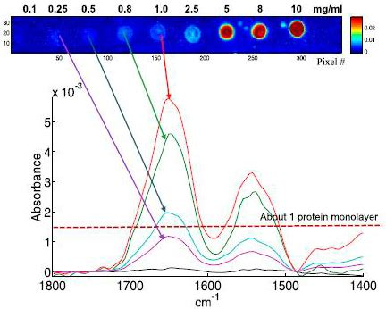 FT-IR spectra from picolitre-samples of protein