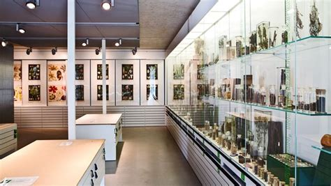Scientific Collections : Department of Biology